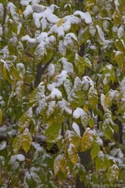 Snow on Beech