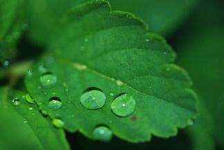 leaf-8701_1280