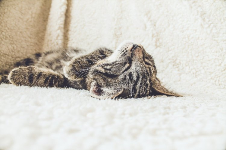 cat tired
