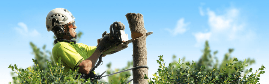 brisbane tree services palm tree removal