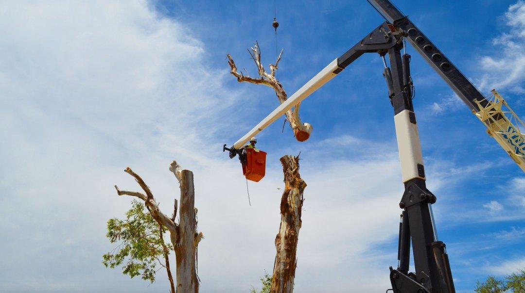 tree removal brisbane northside