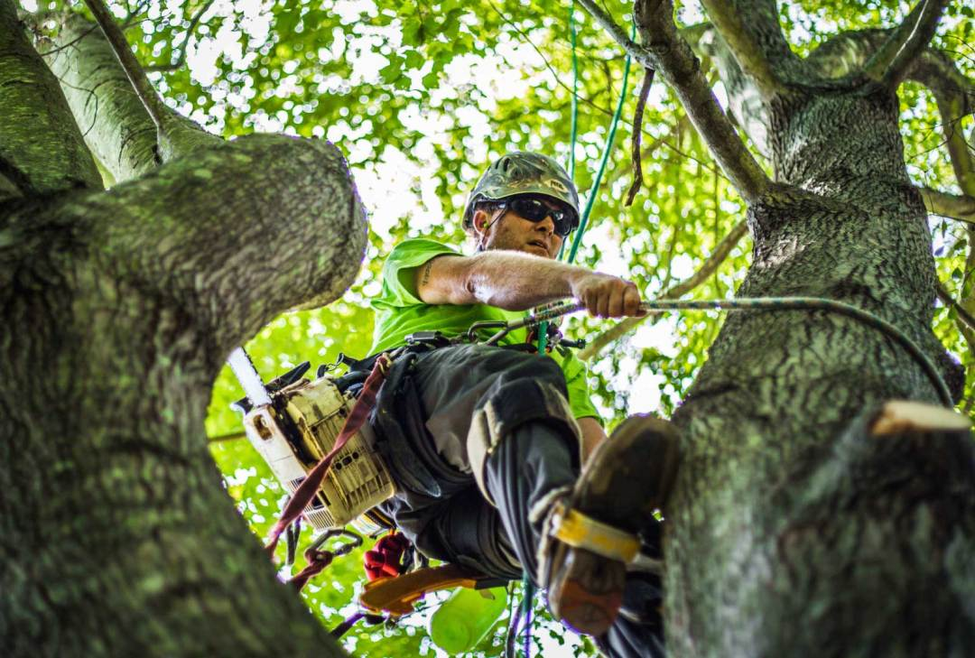 tree trimming cost brisbane