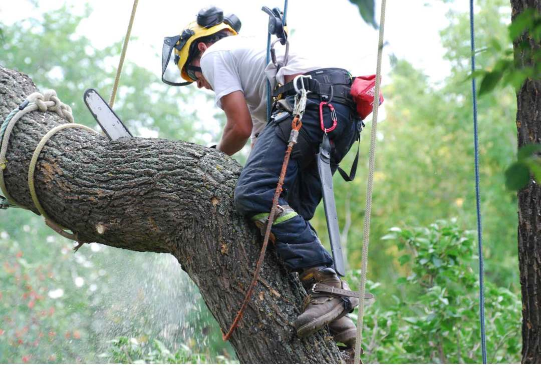 Image result for tree lopping brisbane