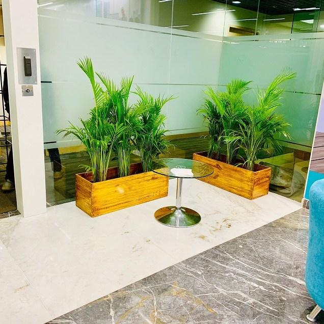 Interior plants bangalore
