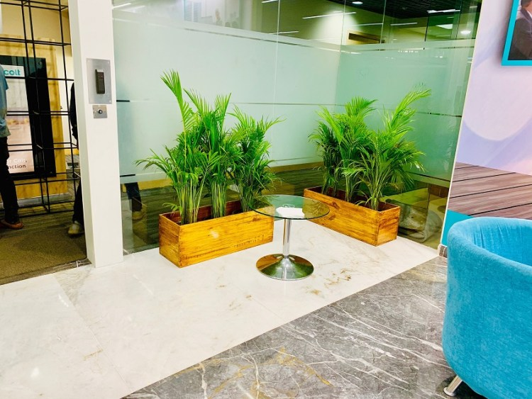 Interior plants bangalore