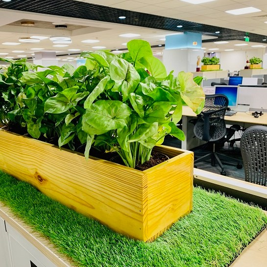 Artificial grass office