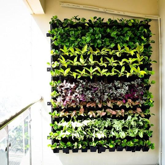 Vertical garden designers bangalore