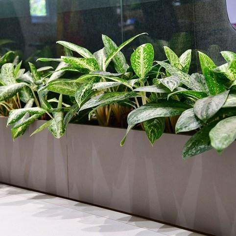 plants maintenance