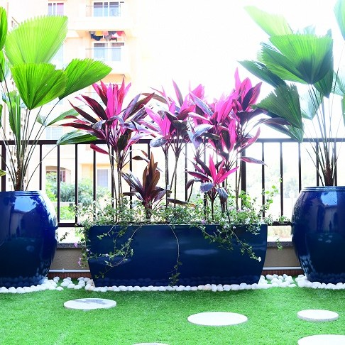 Terrace garden plants