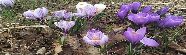 Spring Flowers edited