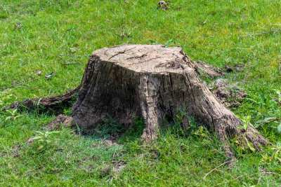 Tree stump removal job performed by us - before picture
