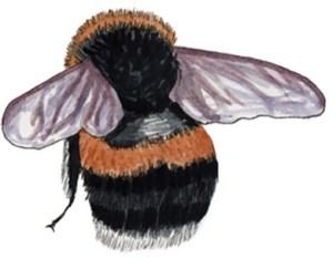 Bumblebee illustration