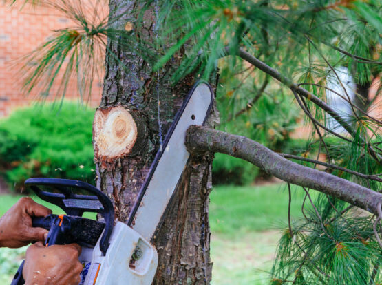branch removal Mansfield ma