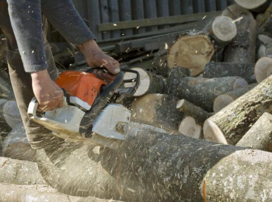 stump grinding Mansfield