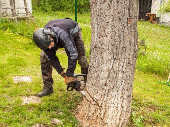 tree cutting Mansfield ma