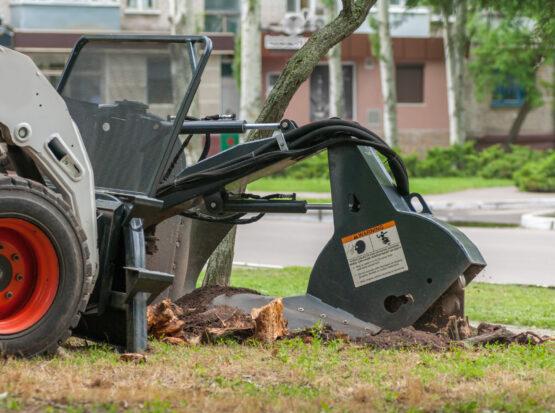 tree stump grinding service Mansfield