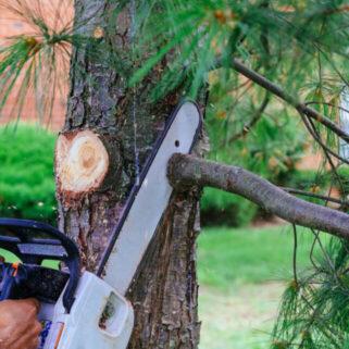 branch removal services Norton ma