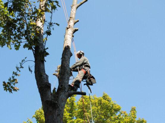 tree removal services Norton ma