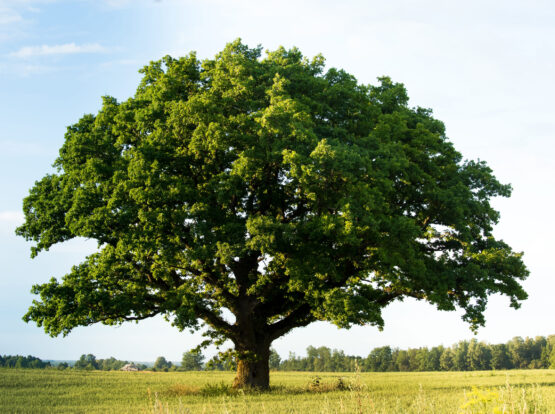 tree company Norton ma
