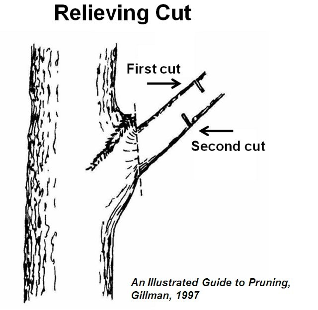 Pruning Branches of Trees