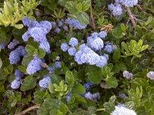 march-flowers-3.jpg