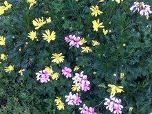 march-flowers-7.jpg