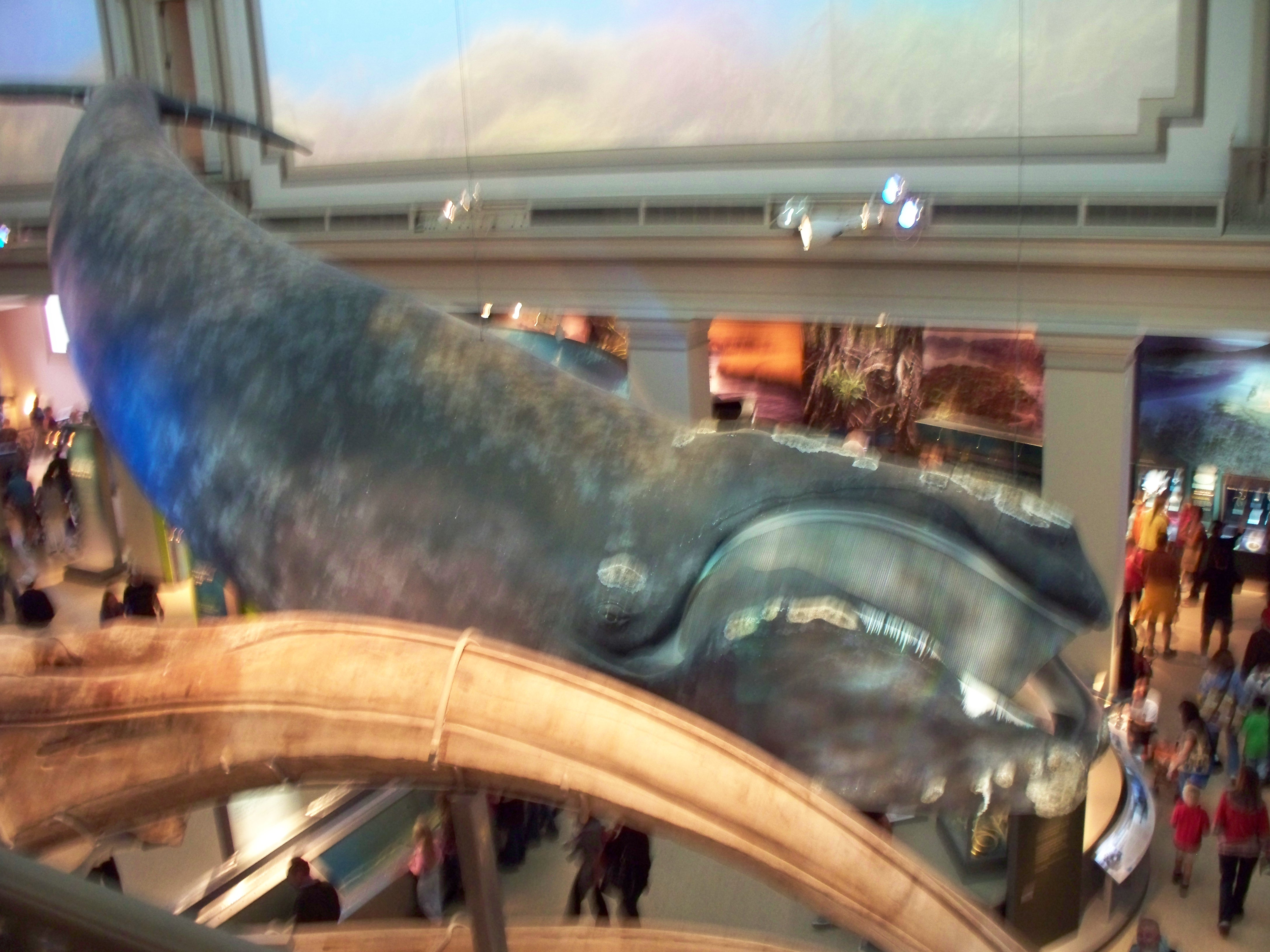 Blu Whale from side