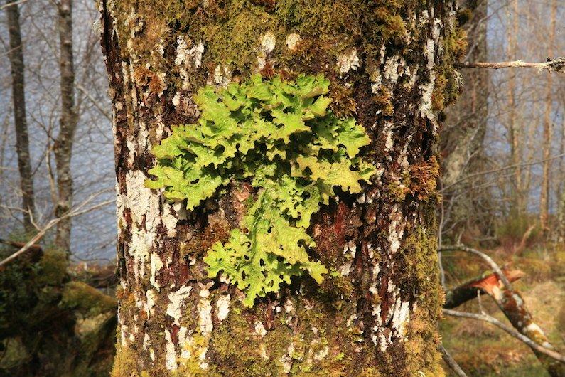 Beneath The Dead Oak Tree