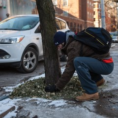 Winter Tree Care Tips!