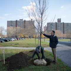 Greening the South Bronx
