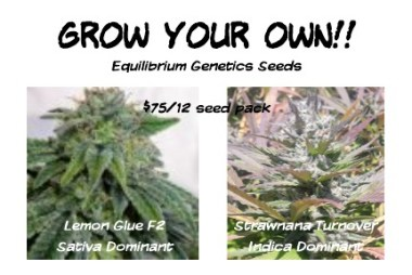 Now Is The Time To Start Your Garden!