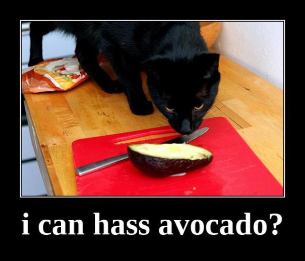 "i can hass avocado?: ""i can hass avocado?"" Yes, Treesong had a punny sense of humor. :)"