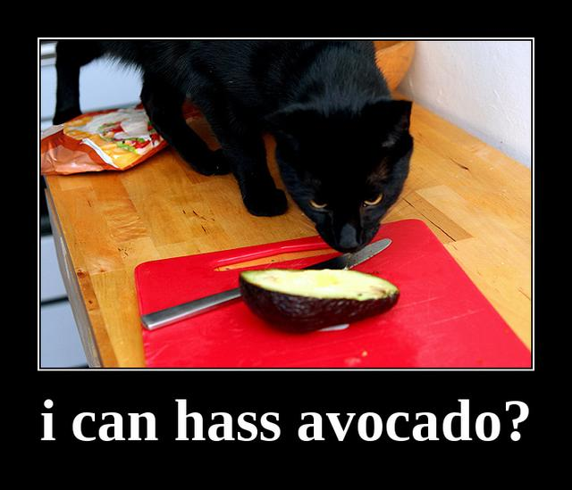 """i can hass avocado?: """"i can hass avocado?"""" Yes, Treesong had a punny sense of humor. :)"""
