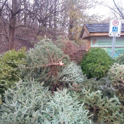 trees-rbg
