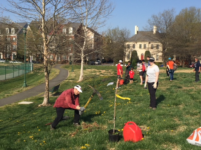 Robert Ray dislodges turf with a pick mattock during tree planting at Ben Brenman Park. Photo by Tree Steward Jane Seward.
