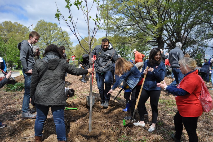Arlington County Board Chair Katie Cristal, second from right, helped with the planting. Photo by Tree Steward Bill Anhut.