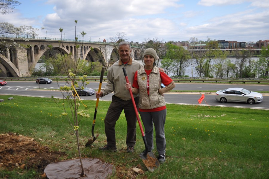 These planters designated their tree as a memorial to a loved one who died too young. Photo by Tree Steward Bill Anhut.