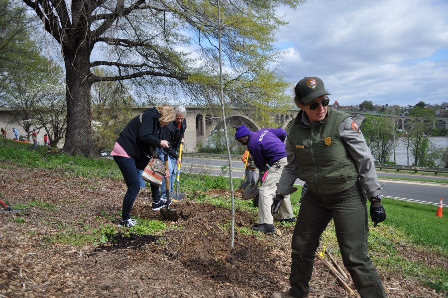 Melissa Westbrook of the National Park Service was on hand to guide planters. Photo by Tree Steward Bill Anhut.