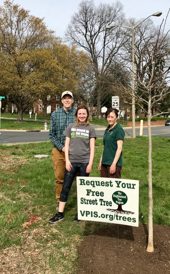 VPIS President Keith Thurston and Tree Stewards Emily Graffum and Vicky Tsaparas planted two large black gum (Nyssa sylvatica) trees on South Washington Street at East Fairfax Street on April 21. Photos by Tree Steward Jo Allen.