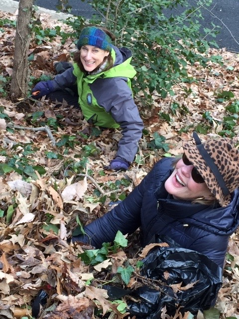 Eileen Grant and Lynn Gas pulling ivy from trees on a hillside at Ivy Hill Cemetery.