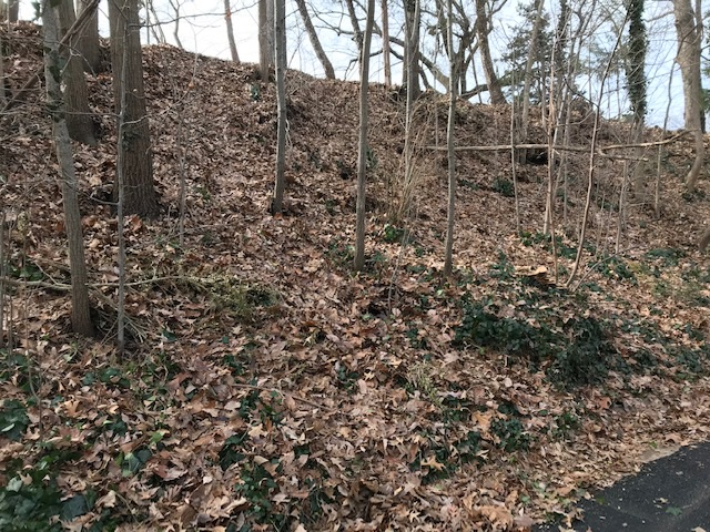 Photo by Mary Farrah. Ivy under a thick layer of leaves remains on the slope. Under ideal conditions, it would be uprooted and discarded. Then new, native groundcover would be planted immediately to hold the soil.