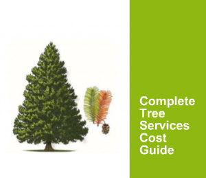Complete Tree Services Cost Guide
