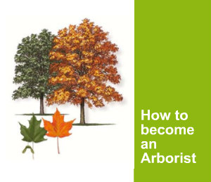 How to become an arborist guide