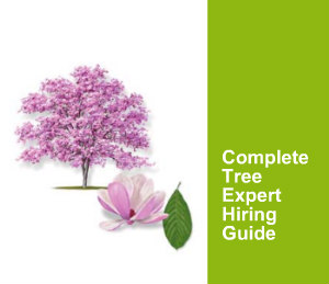 Complete guide to hiring a tree expert near you