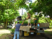 Sending trees off to be planted