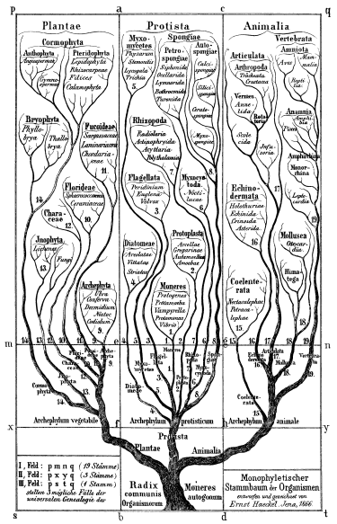 Haeckel Tree