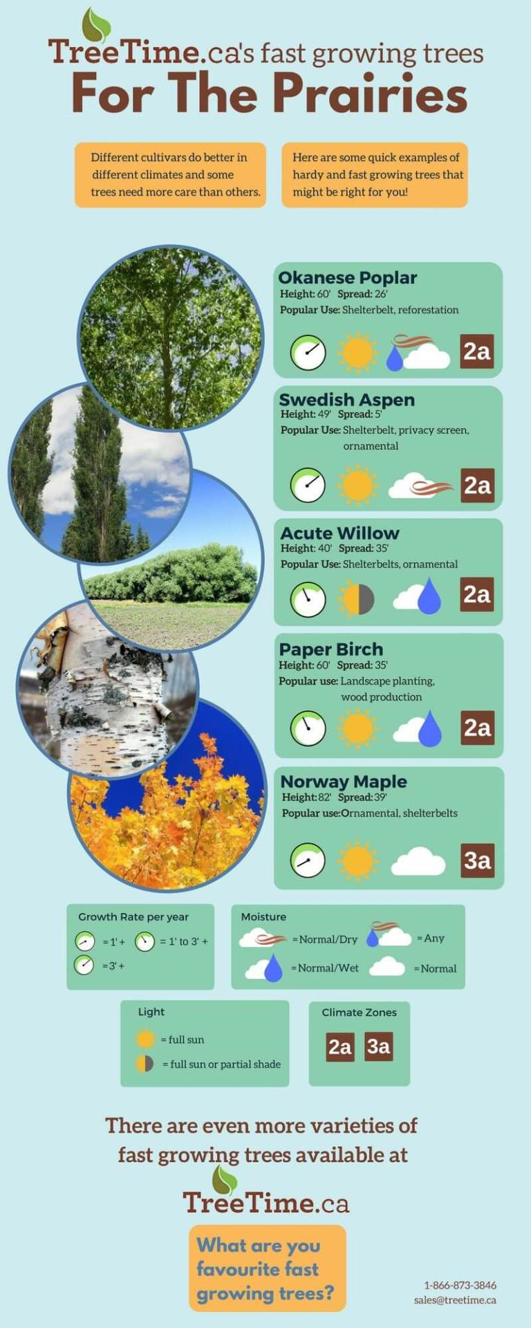 An Infographic describing some fast growing trees for the prairies