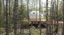 Treepods - Treetop Haven