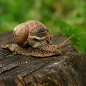 snail on tree stump