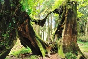 Heart shape in dying tree